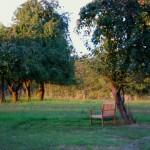 Logenplatz für den Sonnenuntergang auf der Obstwiese