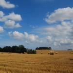 Endlose Weiten - Sommerliches Kornfeld in Mecklenburg