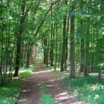 Wunderschöne Wälder liegen in nächster Nähe des Naturferienhauses
